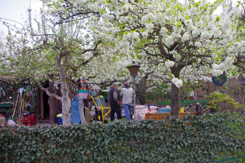 kleingarten in berlin cornelia schmidt. Black Bedroom Furniture Sets. Home Design Ideas
